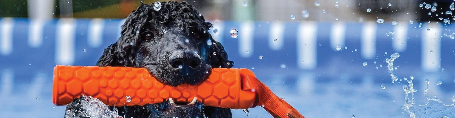 A dog with tug toy in mouth. Click here to shop Tug Toys