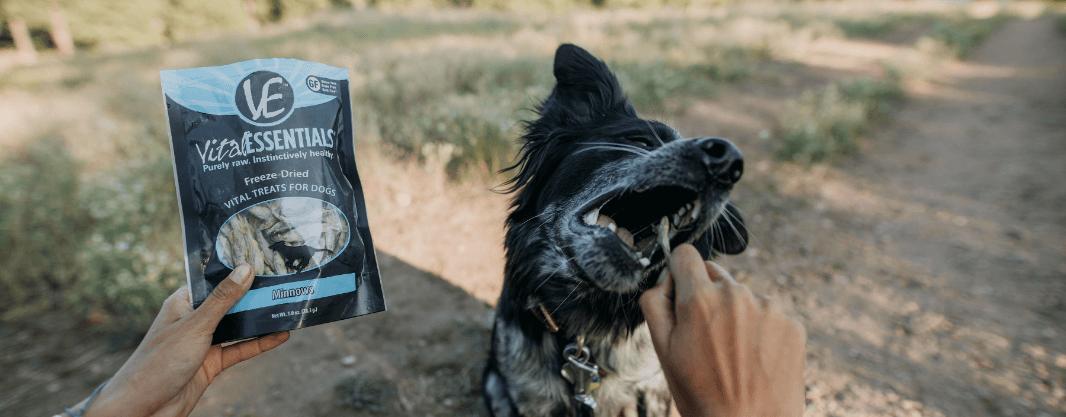 dog eating vital essentials vital treats