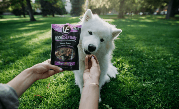 Dog eating Vital Essentials treats