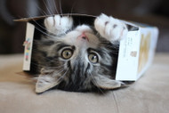 Why in the world do cat's love boxes? Finally explained!