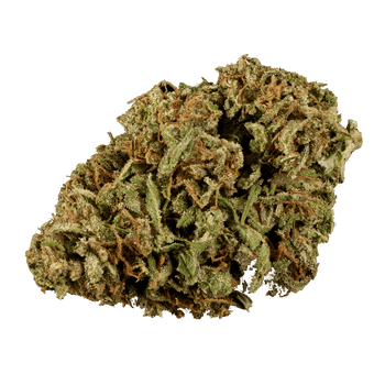 Cherry Wine strain is the perfect mix of taste, smell and effects. Also, known for its rich terpene and cannabinoid profile. This CBD strain gives a realxing therapeutic effects with hints of sweet cherry.