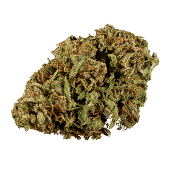 Oregon Cherry CBD Flower | CBDR Hemp Indoor Special Edition. 12.17% CBD High Quality Indoor strain. Oregon Cherry is known for it's compact size and good cbd oil yield. This strain comes from Original Cherry Mom and Original Cherry Dad. Providing low THC, perfect for beginners.