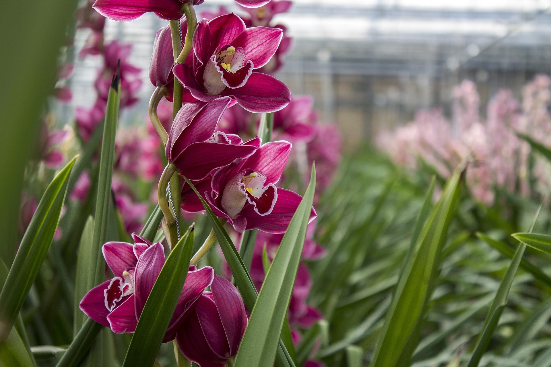orchid-643104-1920.jpg