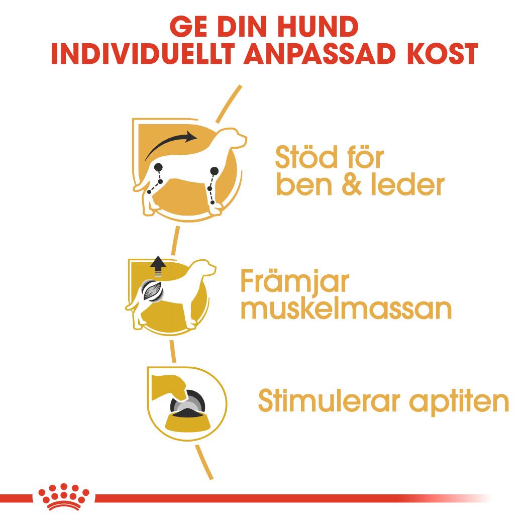 Dachshund Adult Våtfoder för hund