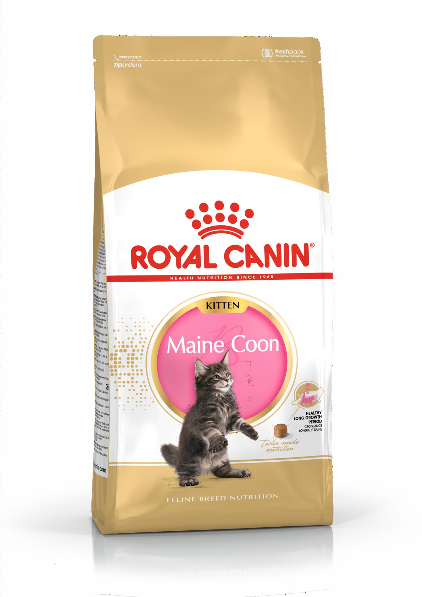 Maine Coon Kitten Torrfoder