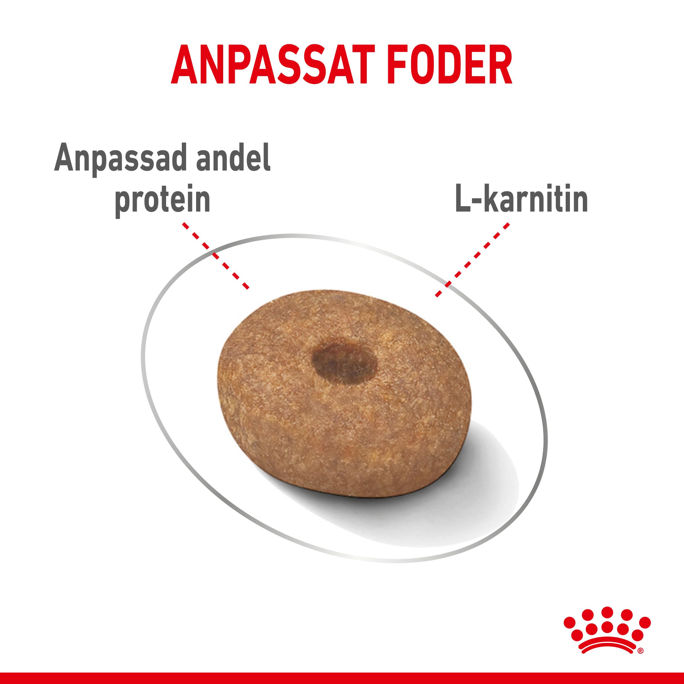 Light Weight Care Adult Mini Torrfoder för hund