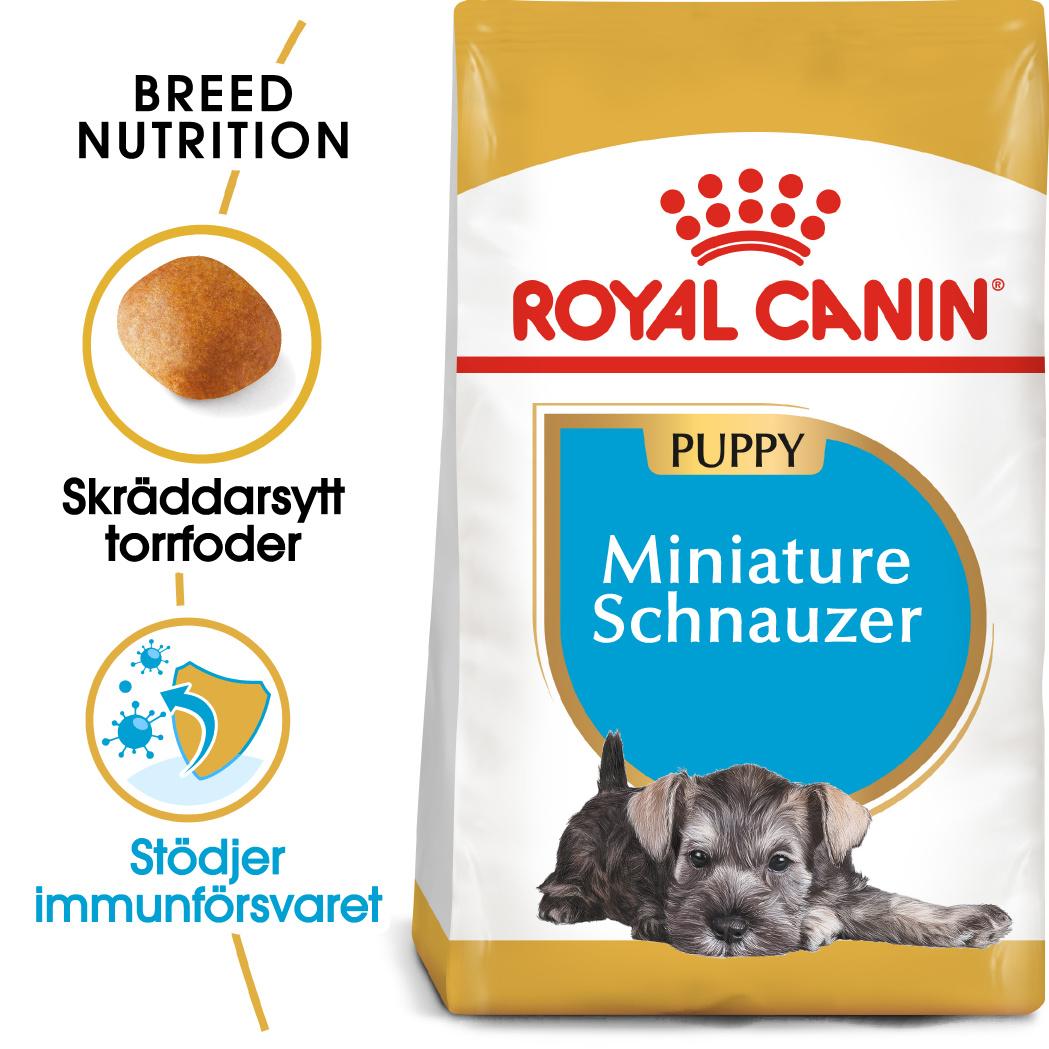 Miniature Schnauzer Puppy Torrfoder