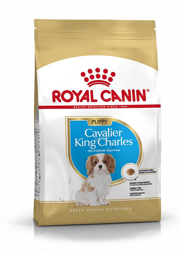 Cavalier King Charles Puppy Torrfoder för hundvalp