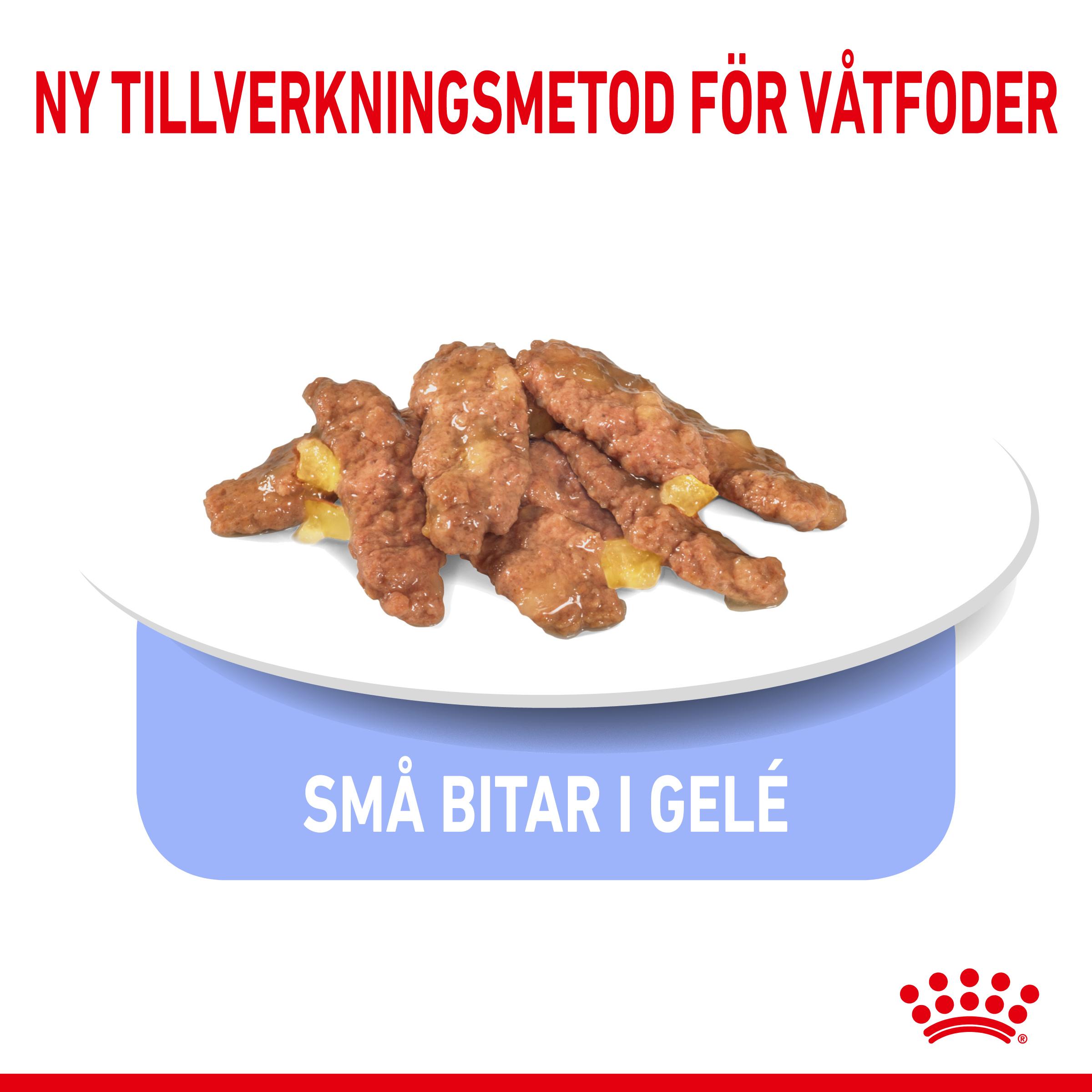 Indoor Sterilised Jelly Adult Våtfoder för katt