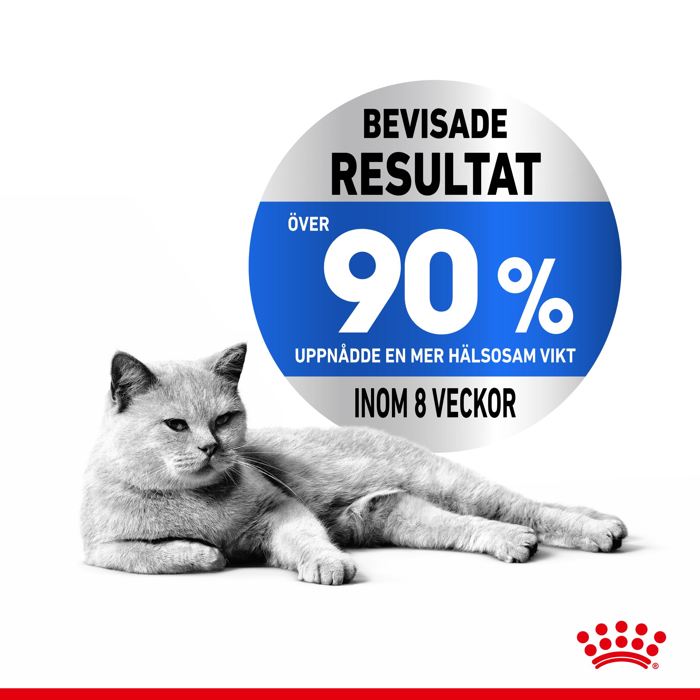 Light Weight Care Adult Torrfoder för katt