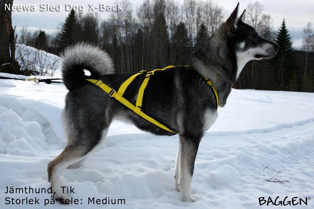 Sled Dog X-Back