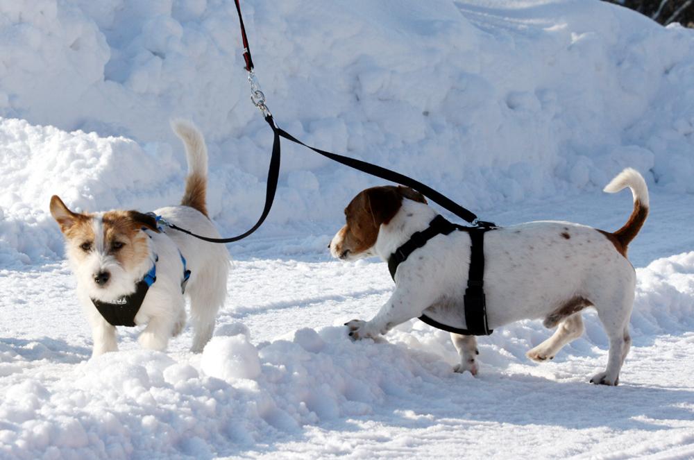 Tvillingkoppel för mindre hundar