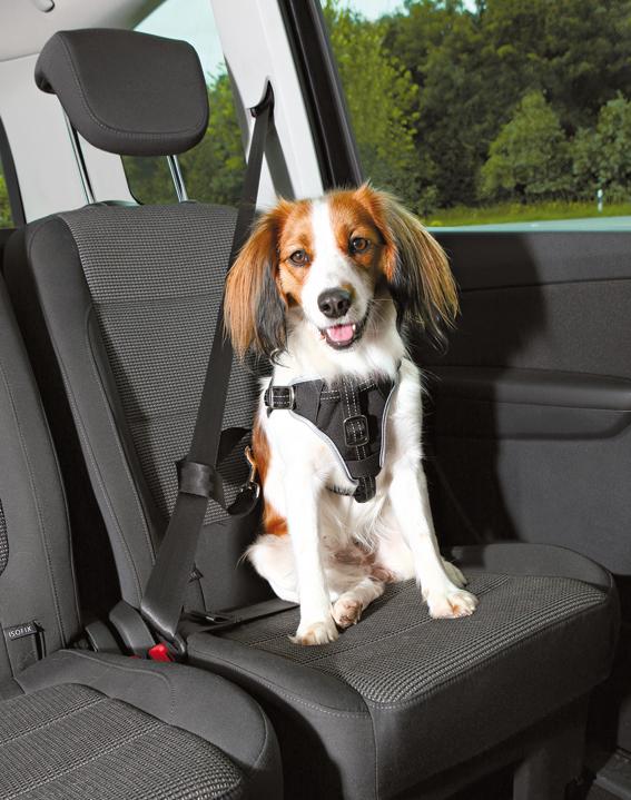 Bilsele för hund