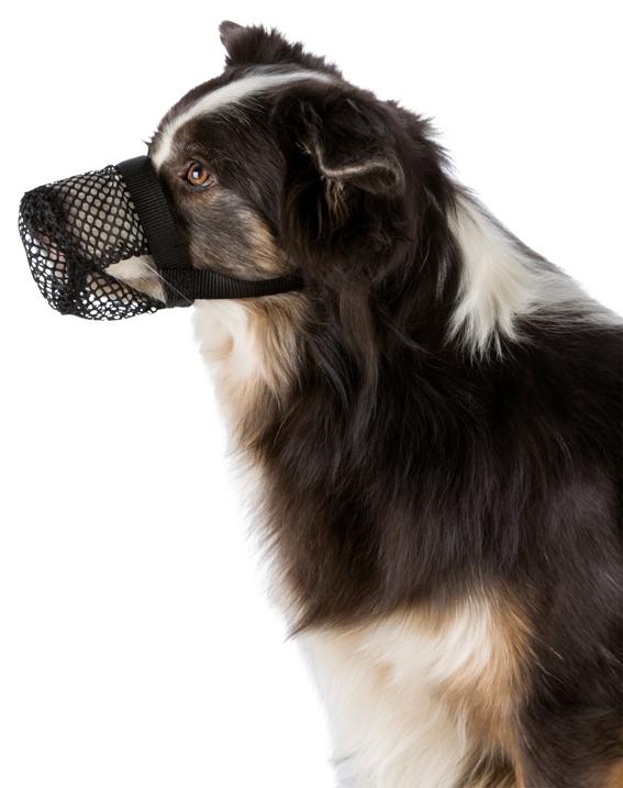 Munkorg mot förgiftning för hund
