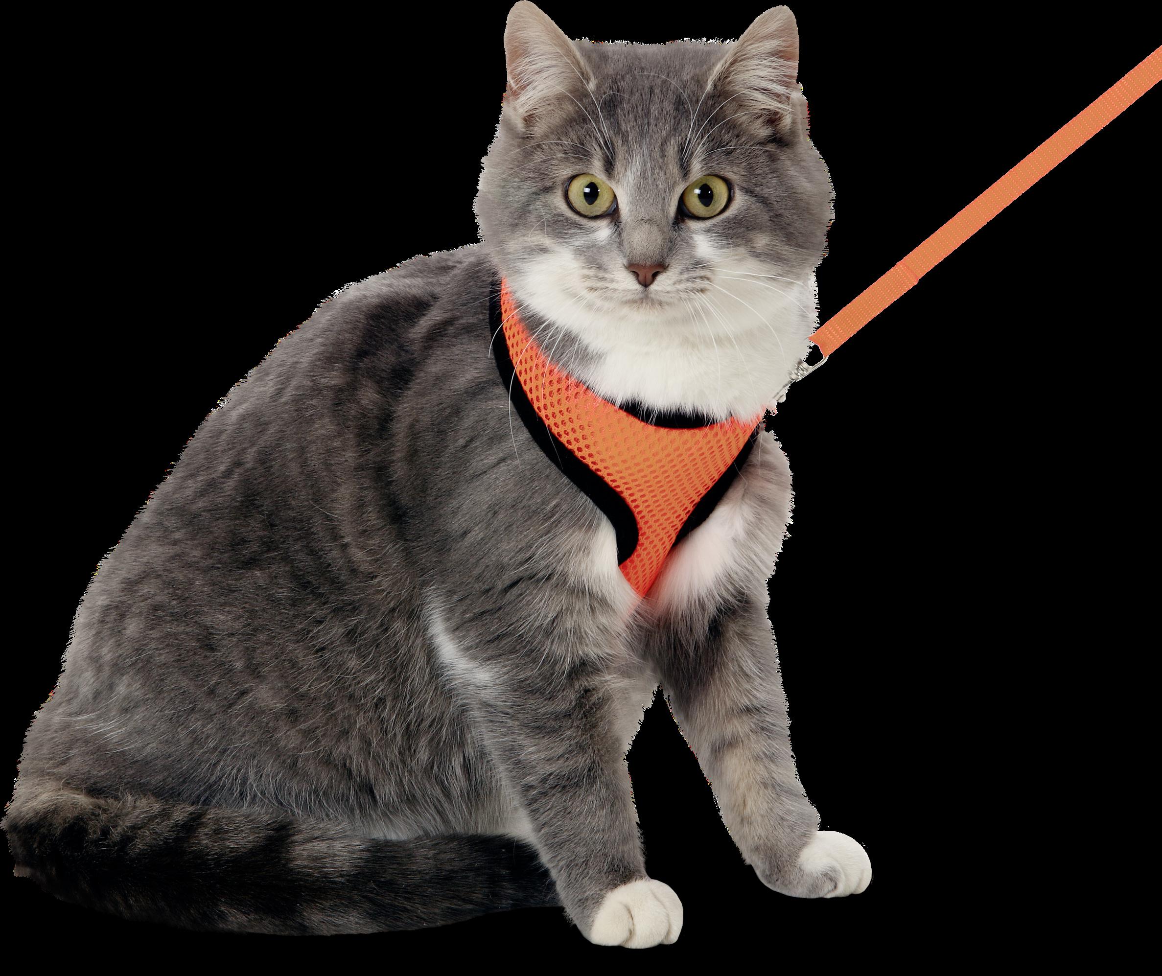 Kattsele med koppel orange/svart
