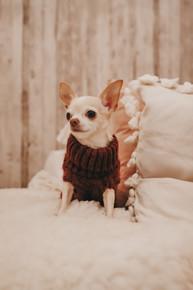Handstickad tröja för hund