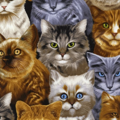 Timeless Treasures Cat Lady Packed Natural Cats 100% Cotton (TT Angry Cats)