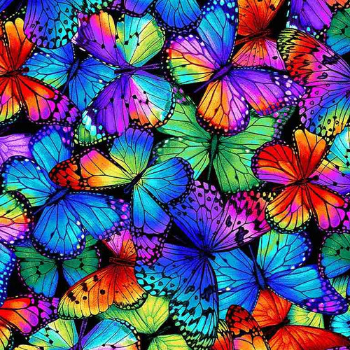 Timeless Treasures Butterfly Magic Bright Packed Butterflies Multicoloured 100% Cotton (TT Butterfly Magic 2)