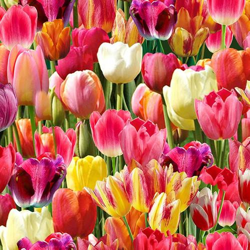 Timeless Treasures Beautiful Bright Tulips 100% Cotton (TT Tulips)