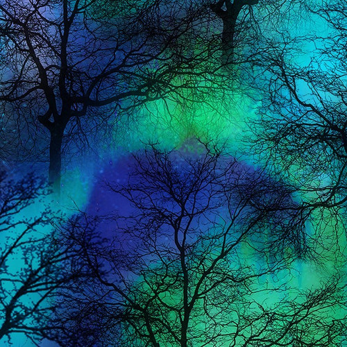 Timeless Treasures Nighttime Silhouette Trees Nature Lit-Up Cobalt 100% Cotton (TT Nature Lit-Up)