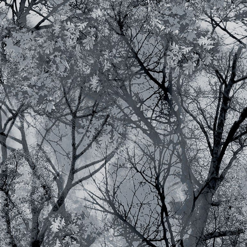 Timeless Treasures Wicked Fog Spooky Forest Trees Grey 100% Cotton Remnant (28 x 112cm TT Spooky Woods)