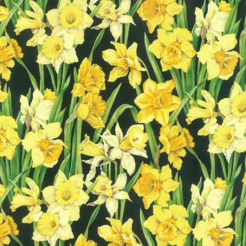 Nutex Spring Yellow Daffodils Black 100% Cotton (Daffodils)