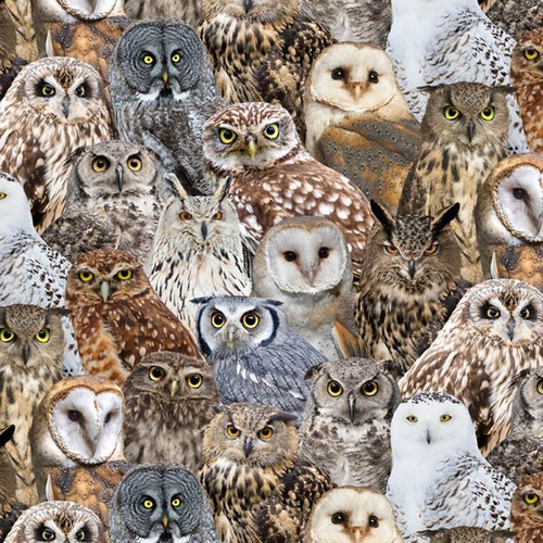 Timeless Treasures Wild Packed Owls Birds Beige 100% Cotton (TT Owls)