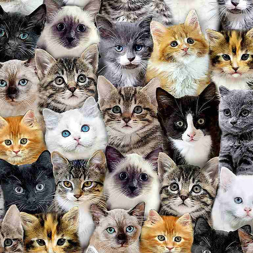 Timeless Treasures Cat Lady Packed Mixed Breed Cats 100% Cotton (TT Cat Lady)