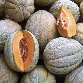 Pride of Wisconsin  Melon