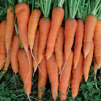 Carrot, St. Valery