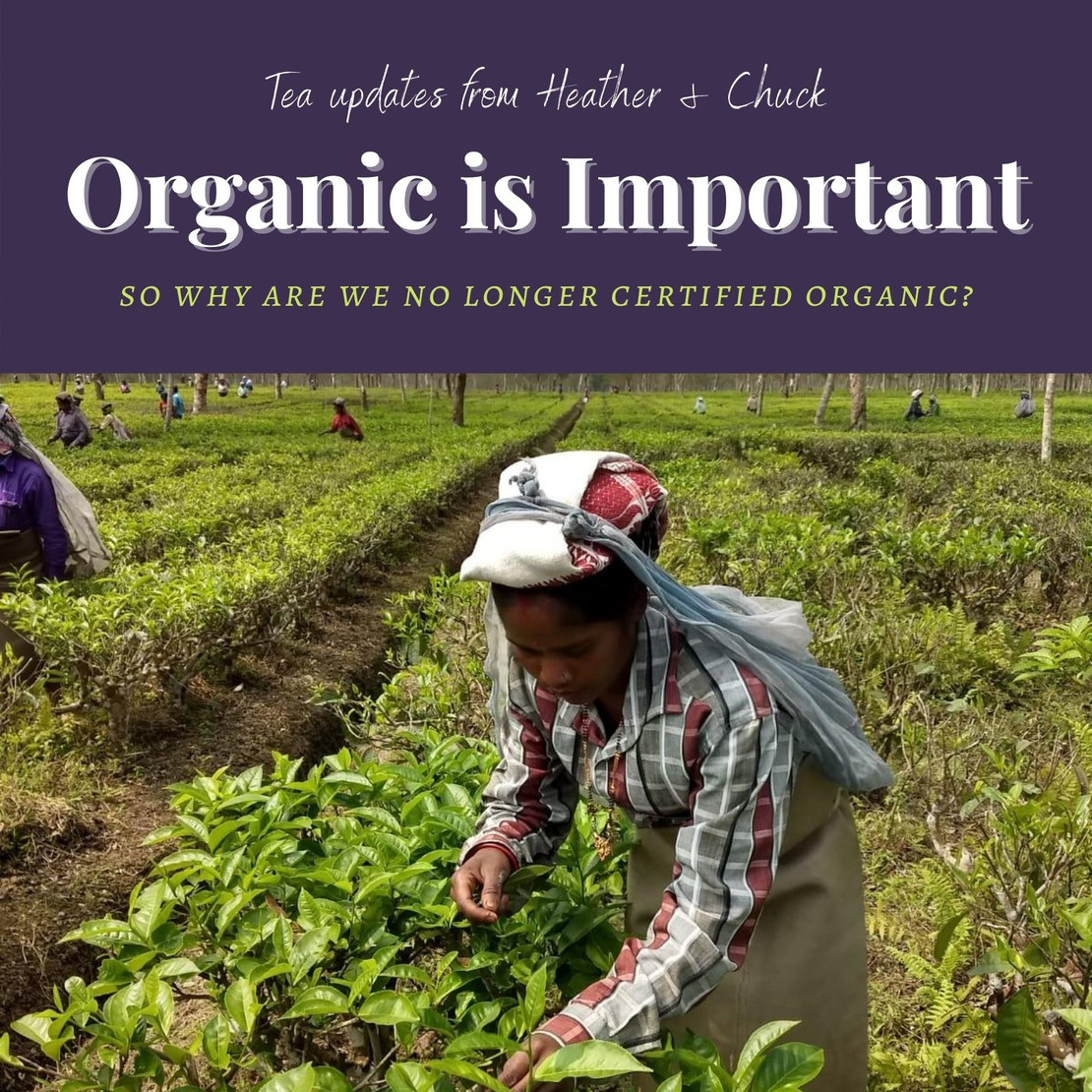 Organic is Important. So why are we not certified?
