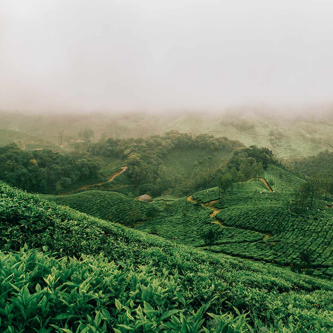 Tea Resources: Tea Tours