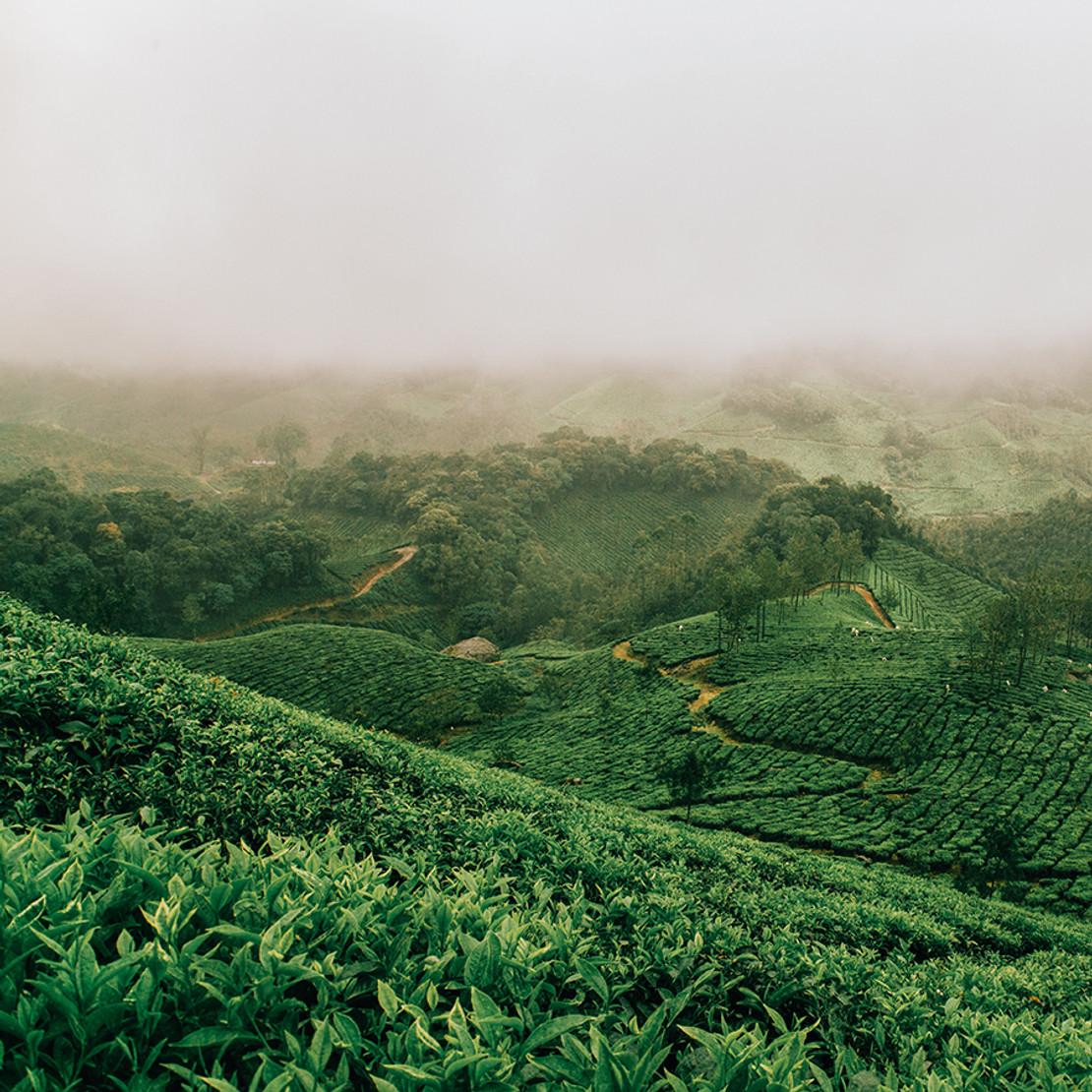 Tea Resources: Tea Tours