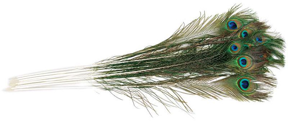 Peacock Eye Feathers 12/Pkg Natural