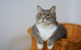 3 Ways to Help a Cat Lose Weight