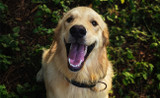 Oral Health for Dogs