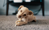 How to Choose a Healthy Dog Food