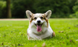 Two Ways to Help a Dog Lose Weight