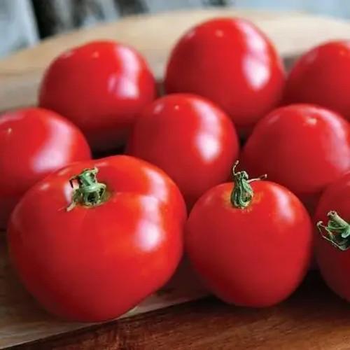 Territorial Stupice Tomato Seed