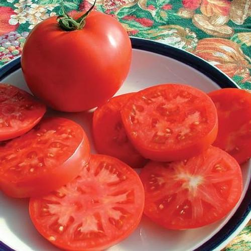 Territorial Legend Tomato Seed