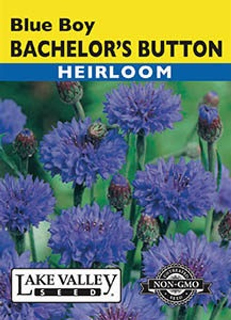 Lake Valley Bachelor's Button Blue Boy Seed