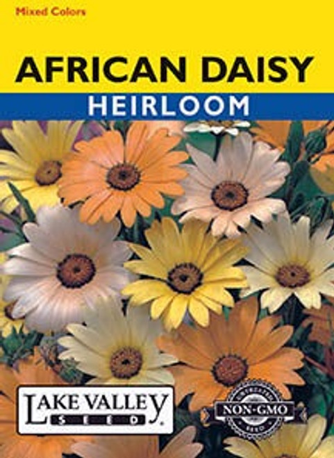 Lake Valley Daisy African Mixed Colors Seed