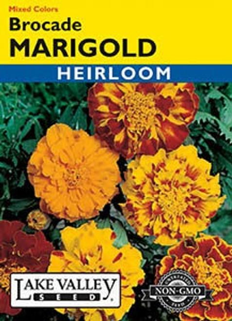 Lake Valley Marigold Brocade Mixed Colors Seed