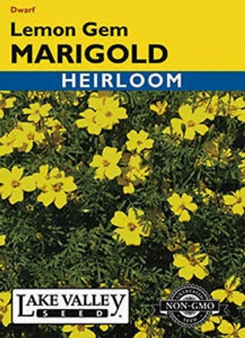 Lake Valley Marigold Lemon Gem Seed