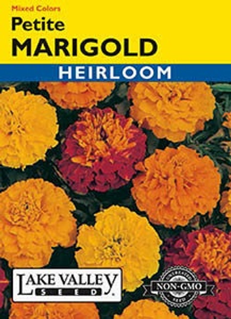 Lake Valley Marigold Petite Mixed Colors Seed