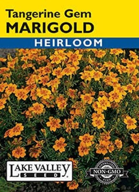 Lake Valley Marigold Tangerine Gem Seed