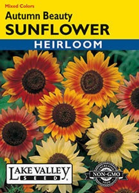 Lake Valley Sunflower Autumn Beauty Mixed Colors Seed