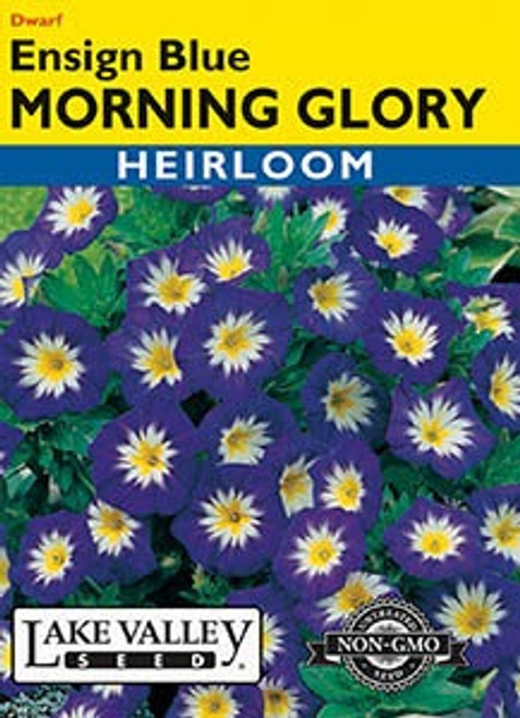 Lake Valley Morning Glory Ensign Blue Seed