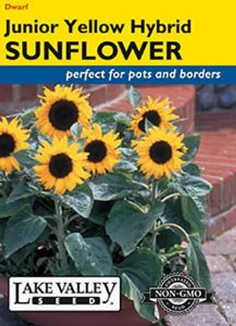 Lake Valley Sunflower Junior Yellow Hybrid Seed