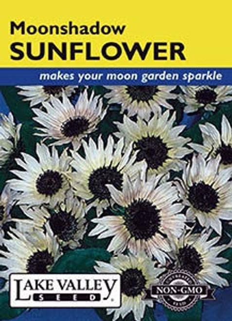 Lake Valley Sunflower Moonshadow White Hybrid Seed